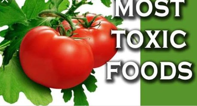 Canned Tomatoes(toxic foods)